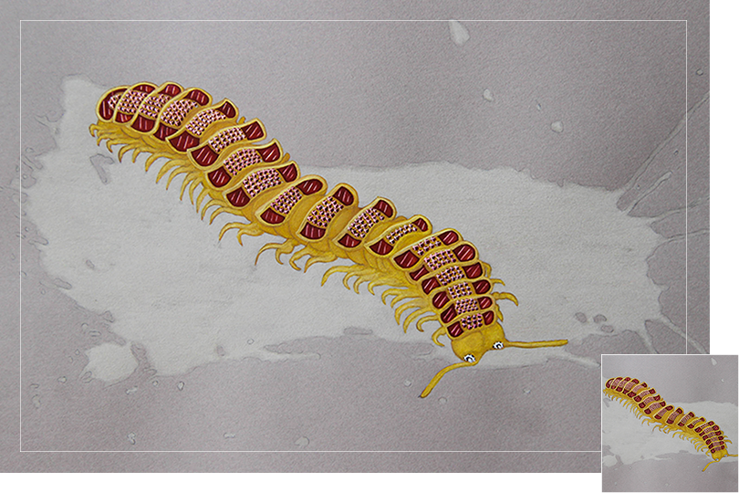 Millipede insect drawing jewelry painting