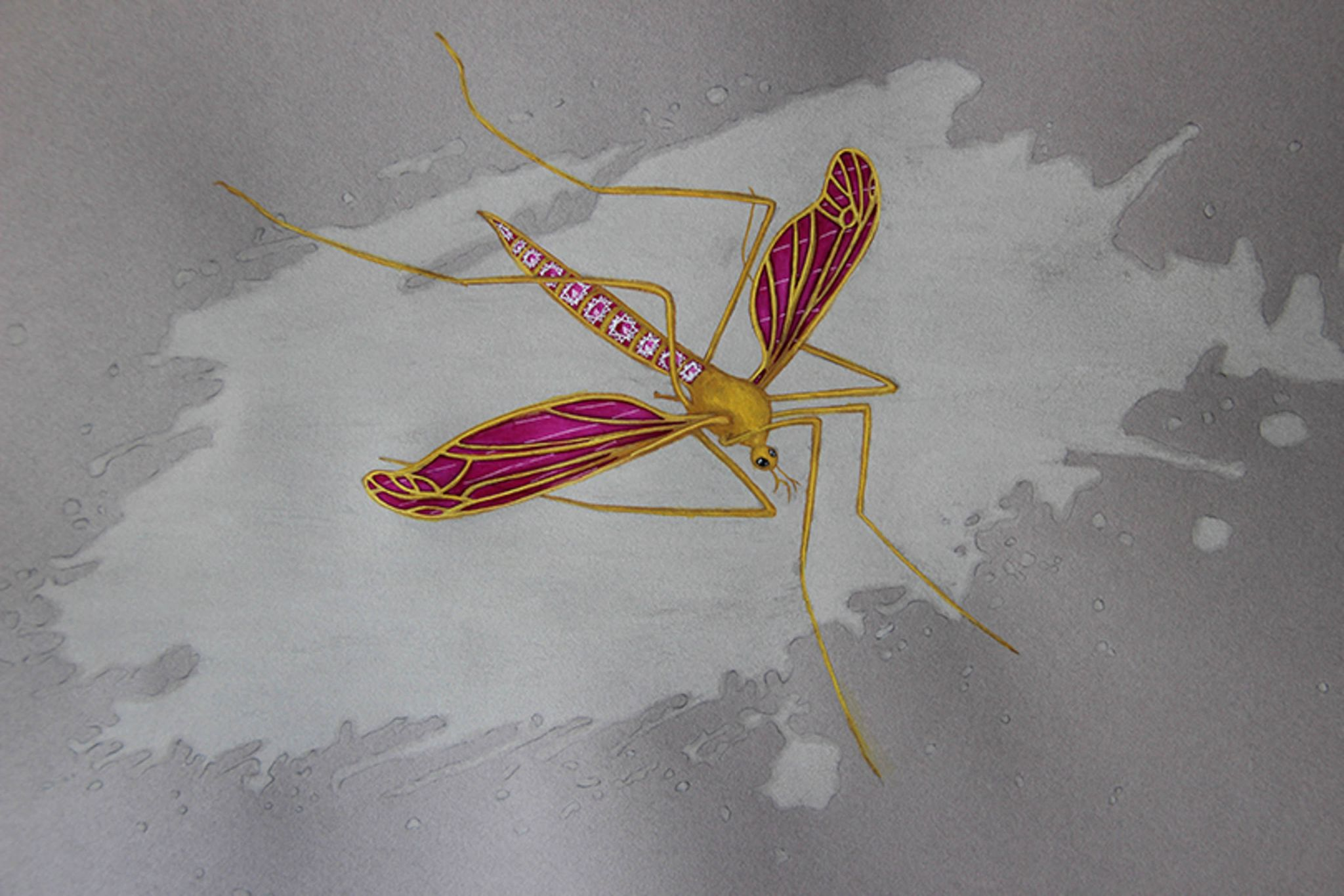 Pink rubellite mosquito insect drawing