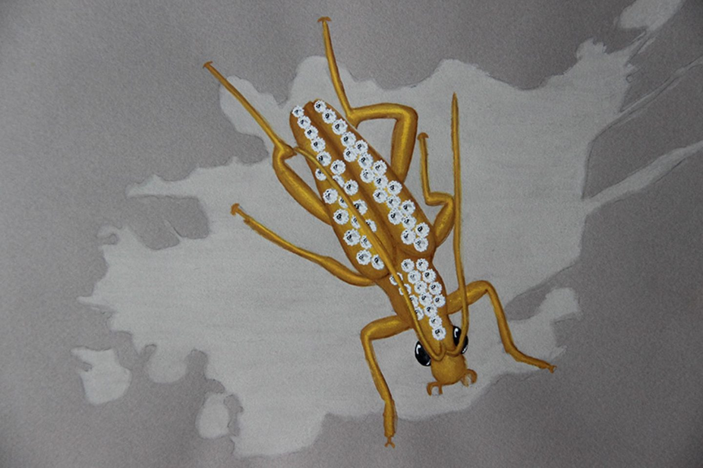 Diamonds reptula maculata drawing jewelry