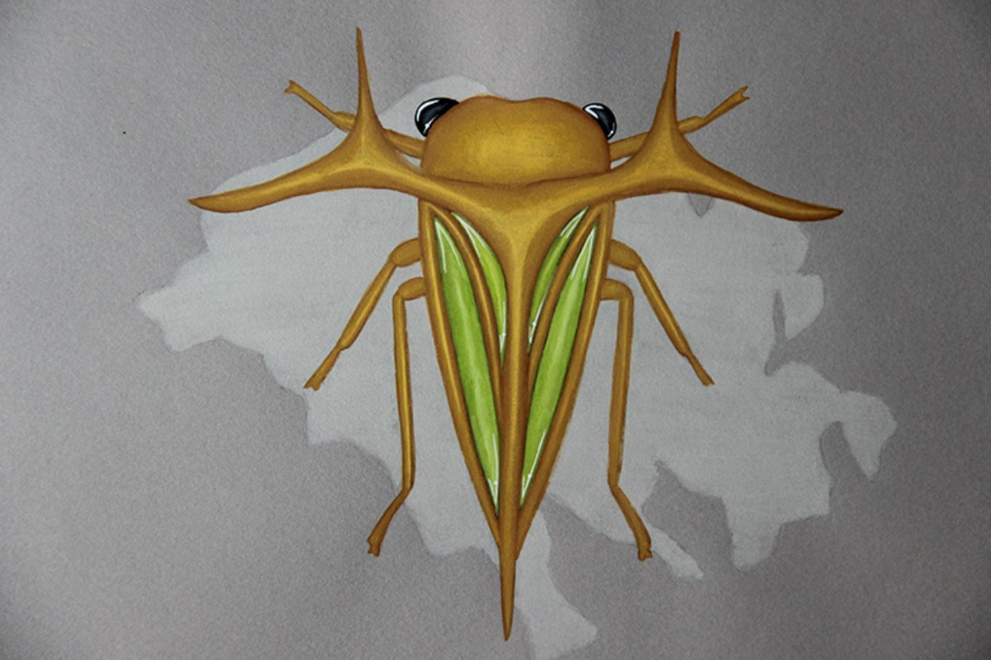 Undercovertoad jade hemiptera drawing jewelry